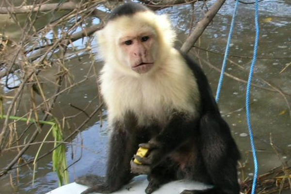 1a_african_vacation_monkey