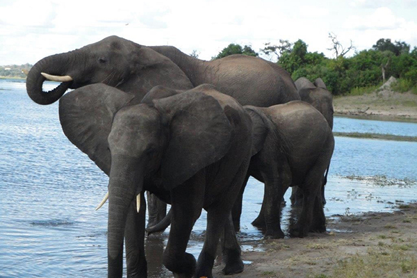 2_photo_safari_vacation_elephant_afri