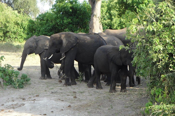3_all_inclusive_africa_travel_elephant_family
