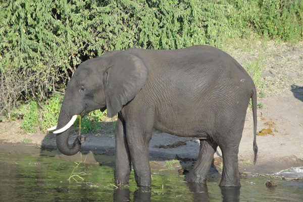 4_african_vacation_deals_elephant_africa