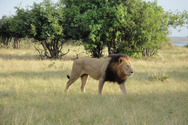 5_all_inclusive_photo_safari_vacation_lion_africa