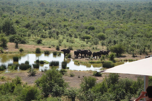7_travel_to_africa_safari_waterhole